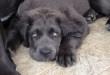 Da leggere PRIMA di acquistare un cane….