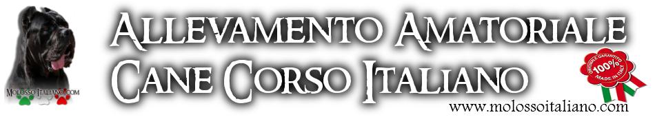 Cane Corso Allevamento – Torino – Piemonte