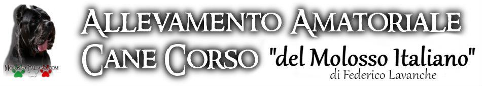 Cane Corso Allevamento – Torino – Piemonte – del Molosso Italiano